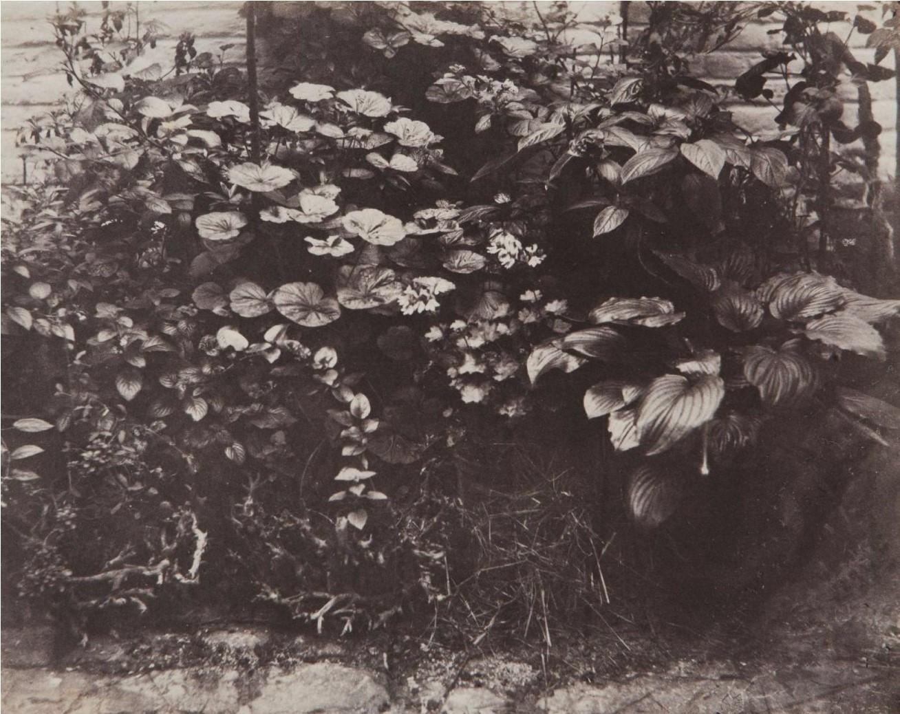 1855. Джерси. В саду