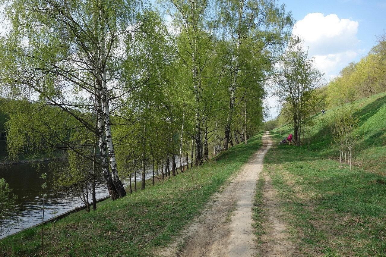 березовая тропа вдоль канала им. Москвы
