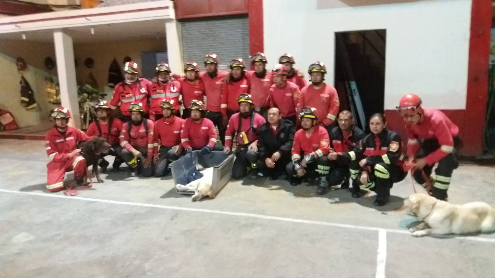 Пес спас 7 человек из-под завалов и умер от обезвоживания