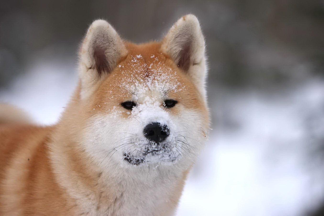 Вся морда в снігу