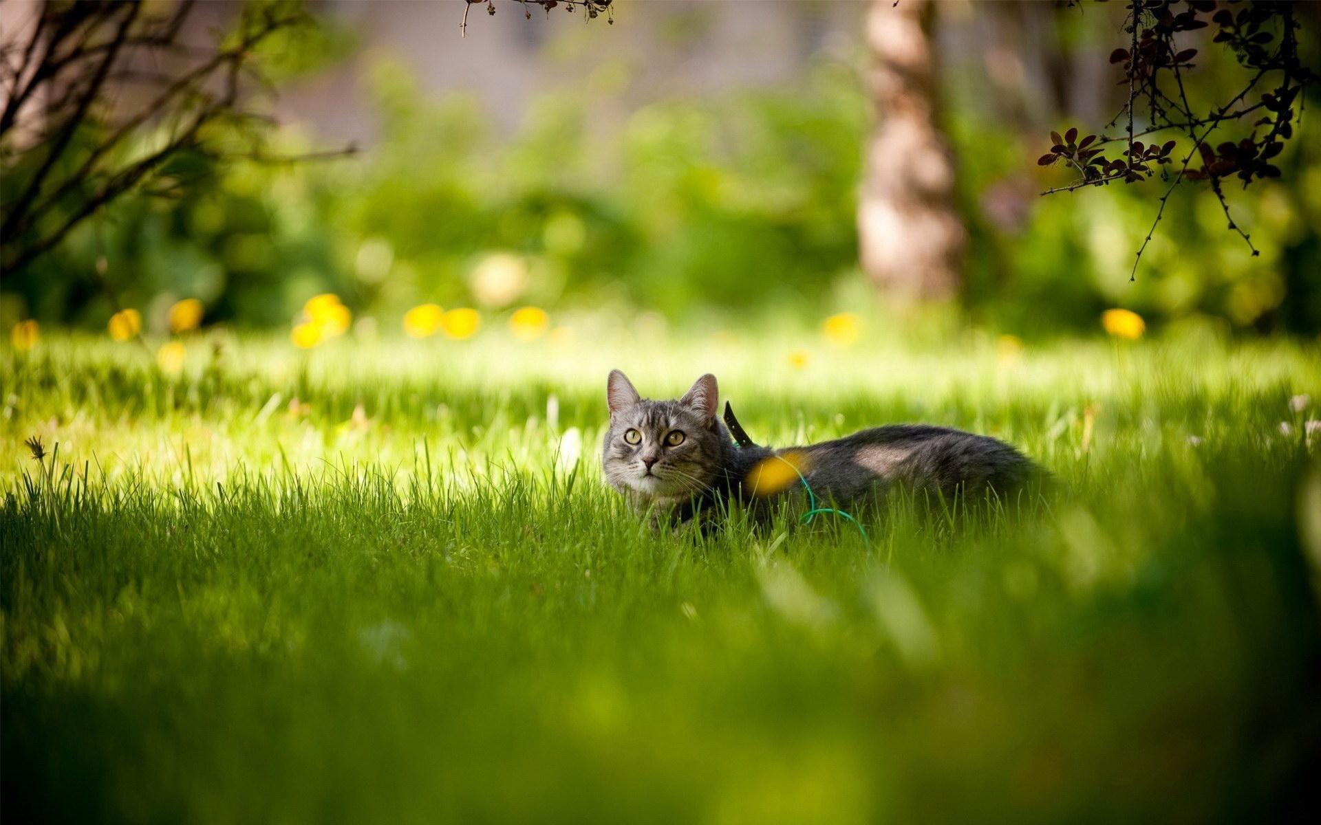 В траві