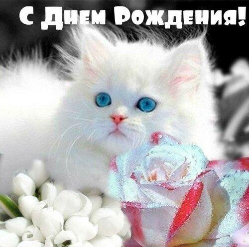 Открытки на день рождения котята