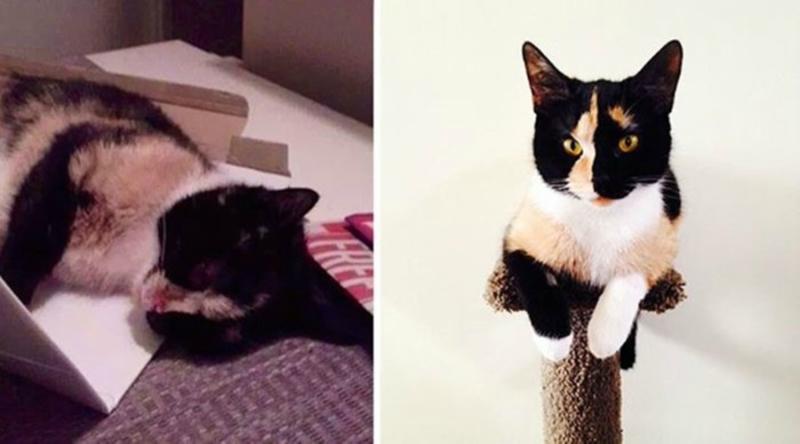 Подборка фотографий брошенных котят и то, какими они стали у новых хозяев