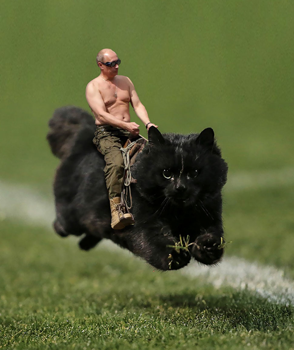 Кот вместо коня.