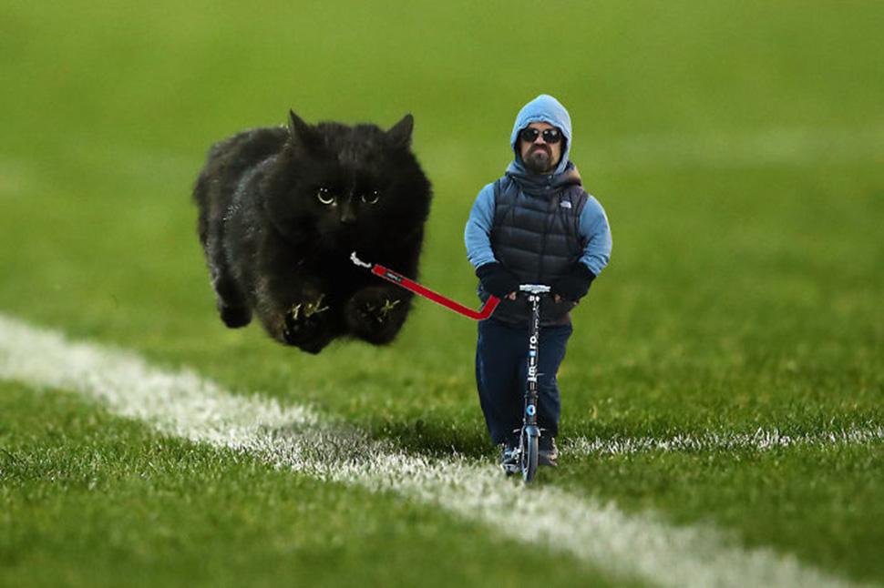 Кот и Питер Динклейдж.