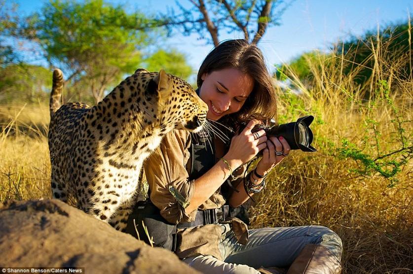 Шеннон выглядит на удивление спокойной и расслабленной, играя с диким леопардом.