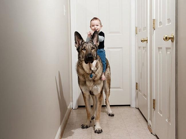 Так ужустроены собаки: они любят нас, оберегают изащищают, ничего нетребуя взамен. Дружба с