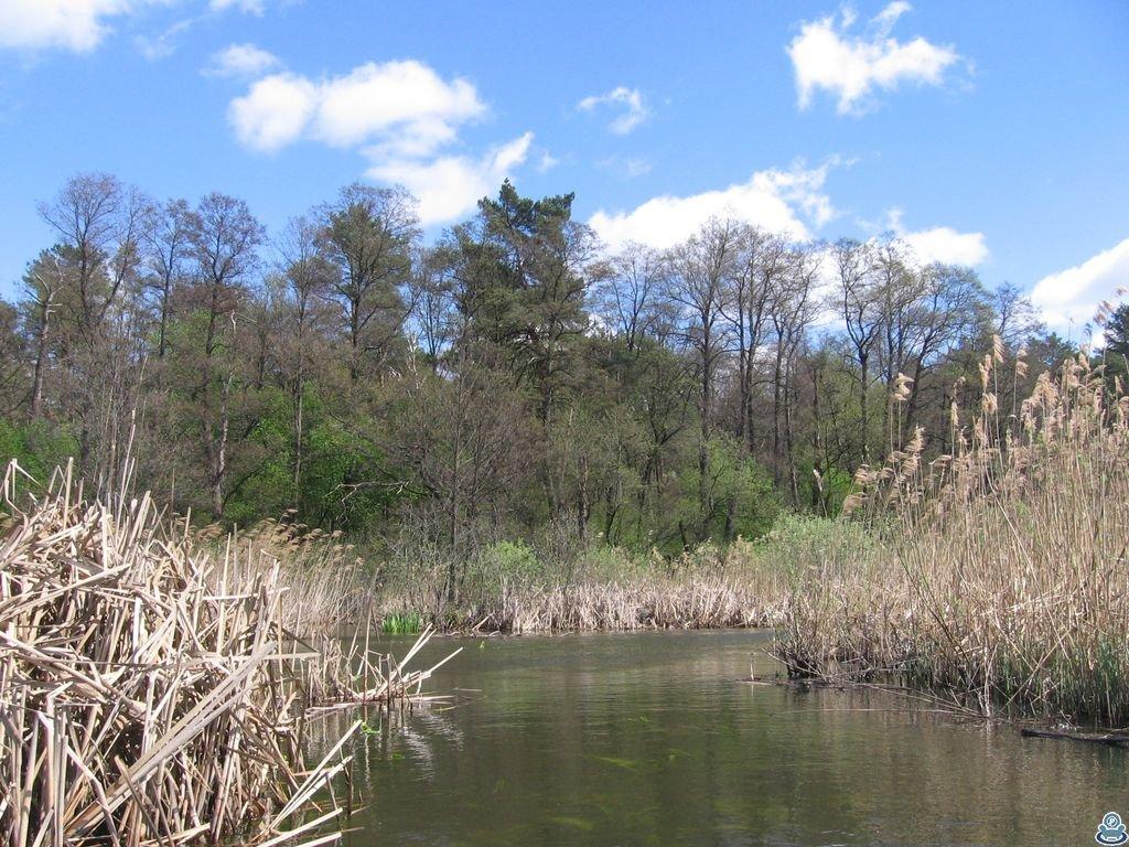 Лес на берегу реки Боромля
