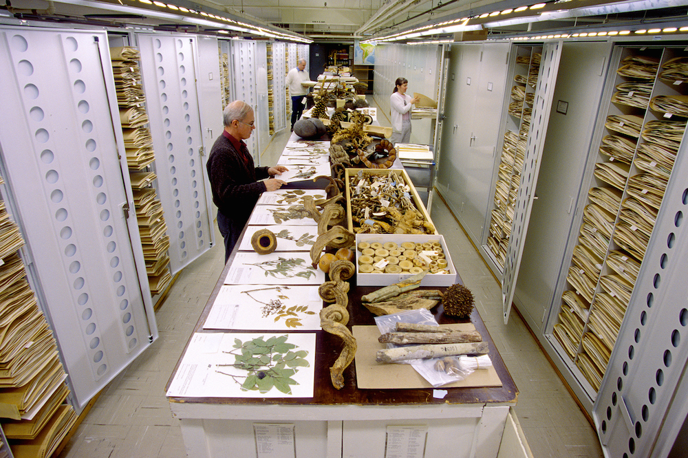 Botanical collections are displayed at the Smithsonian Institution's National Museum of Natural Hist