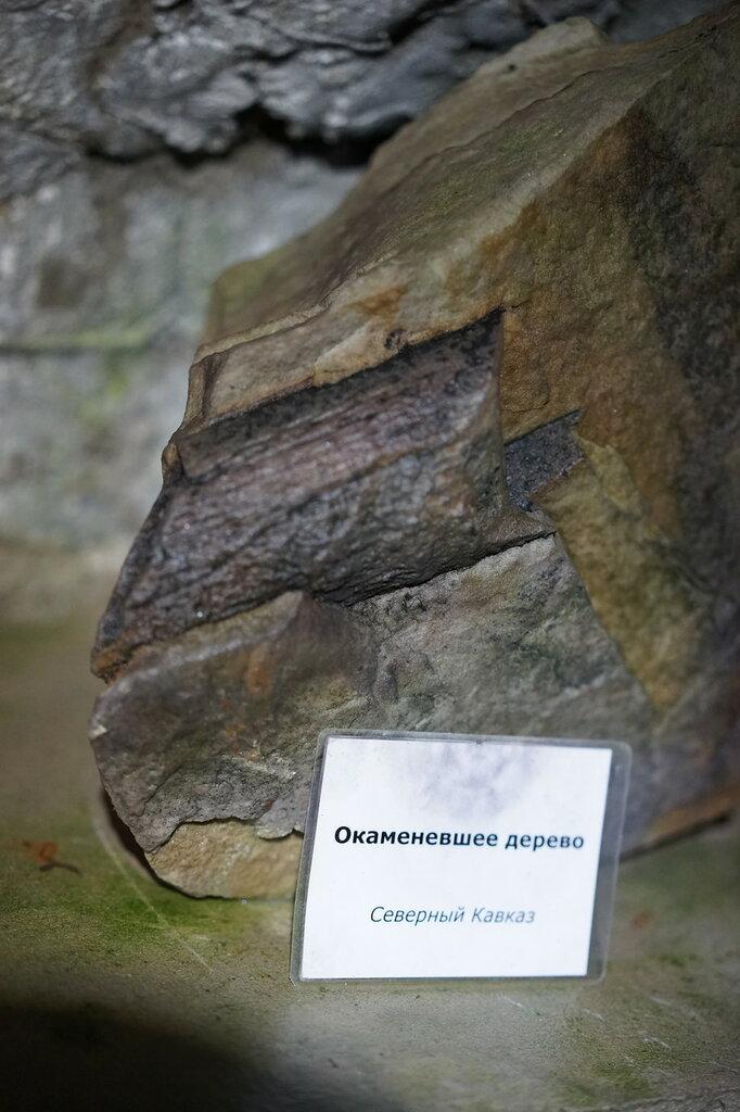 Окаменевшее дерево.Искусственная Медвежья пещера в Сафари-Парке в Геленджике
