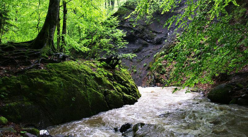 Мхи и скалы