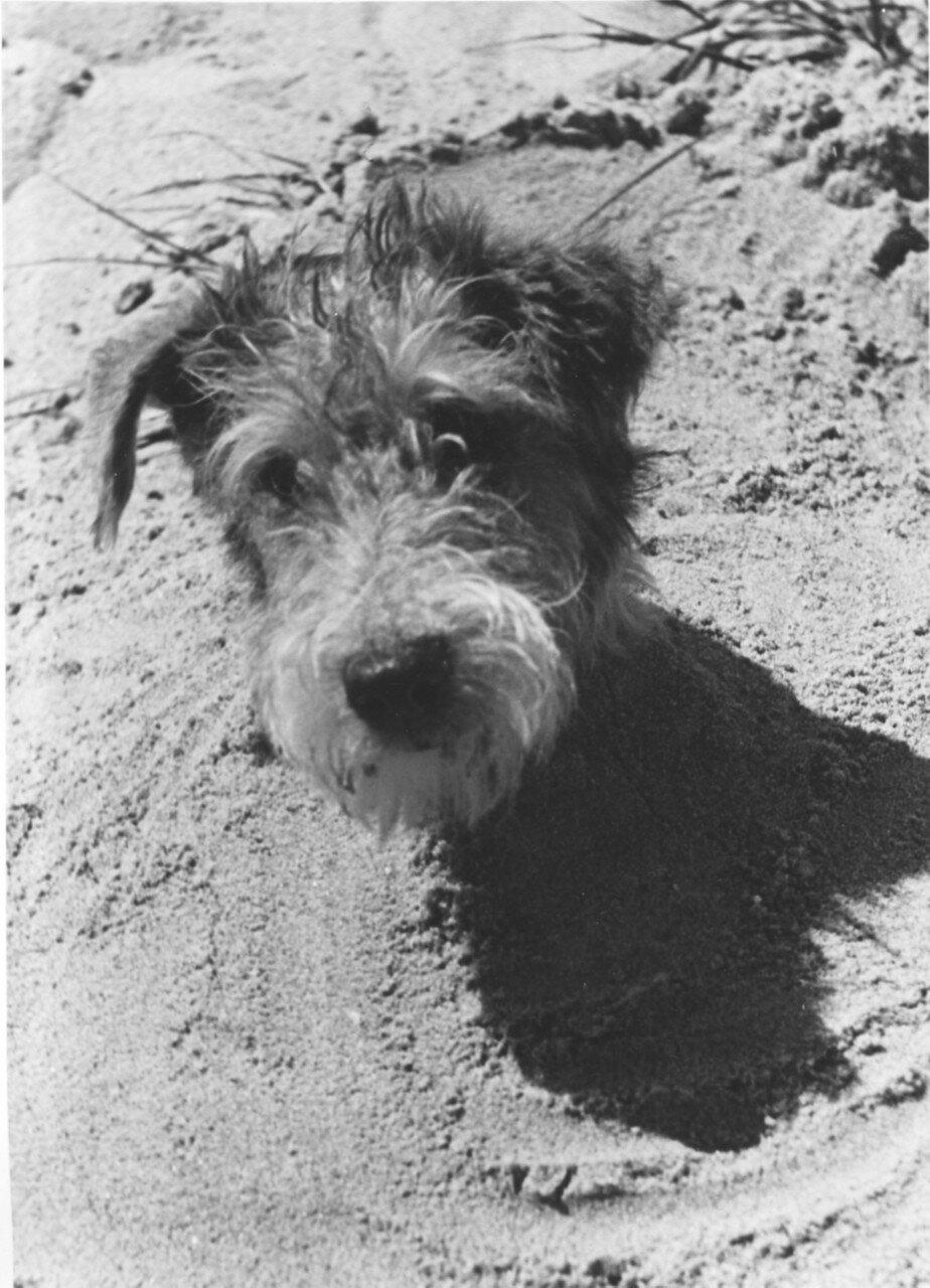 Собака фотографа