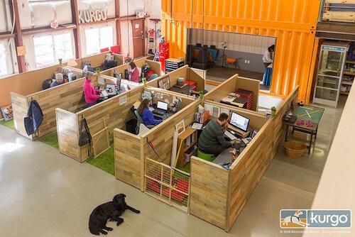 Необычный офис для сотрудников и их собак