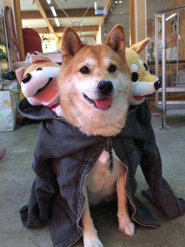 собакен-живность-песочница-милота-2824040.jpeg