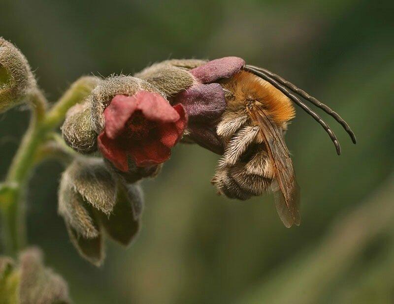 Как спят пчелы. Удивительные фотографии мира живой природы!