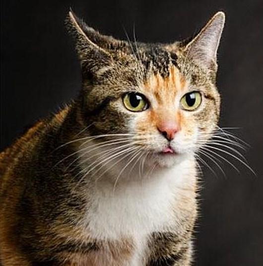 Кошка, отогнавшая от хозяйки двоих собак