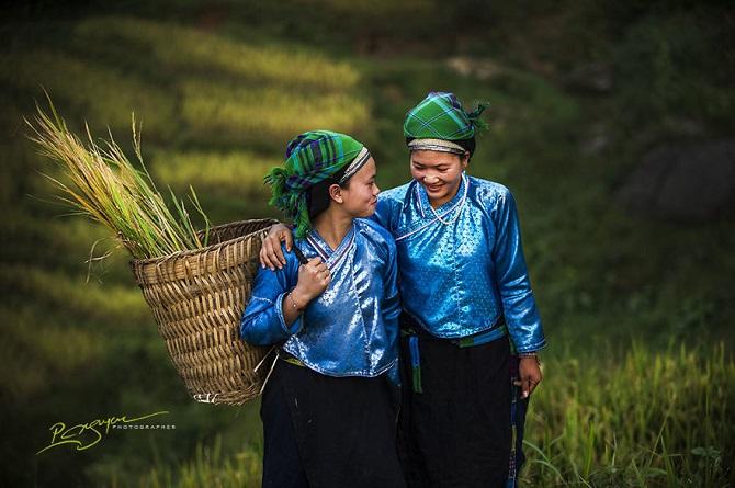 Рисовые террасы в легендарной провинции Ha Giang.
