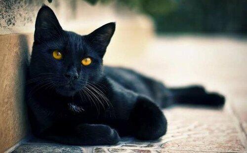 Познавательные факты о черных кошках