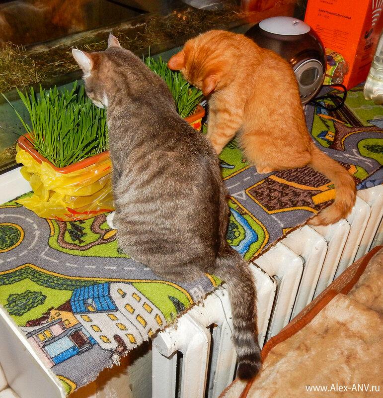 Затем на чавканье подтянулась спящая красавица. И стали они  s жить-поживать /s  траву жрать-поедать.