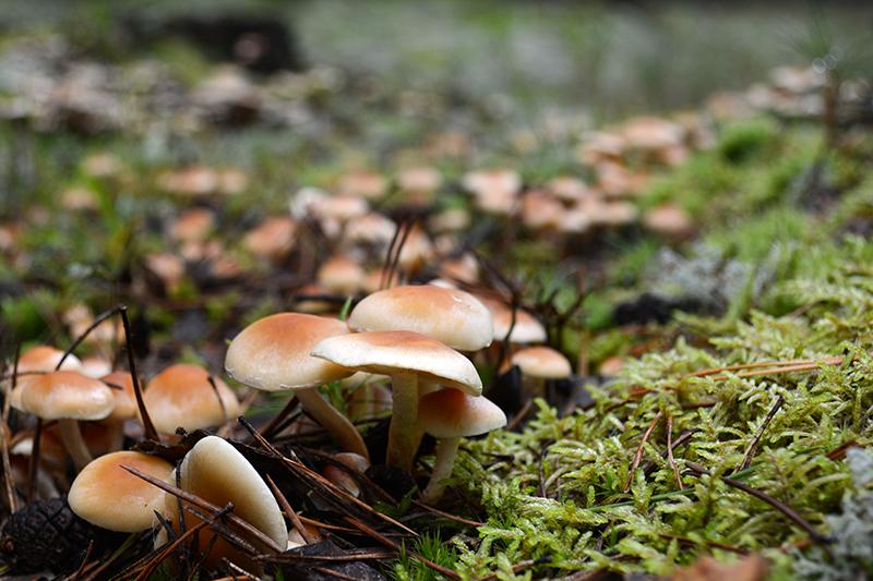 дорога из грибов