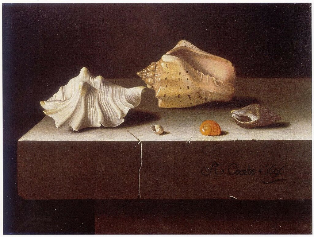 Adriaen_Coorte_-_Two_Large_and_Three_Small_Shells1696.jpg