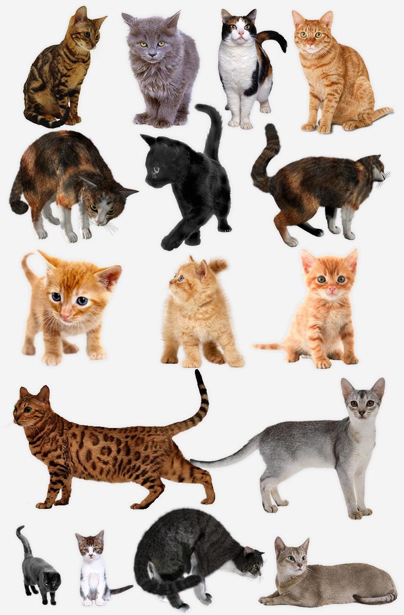 Коты и кошки, шаблоны PNG