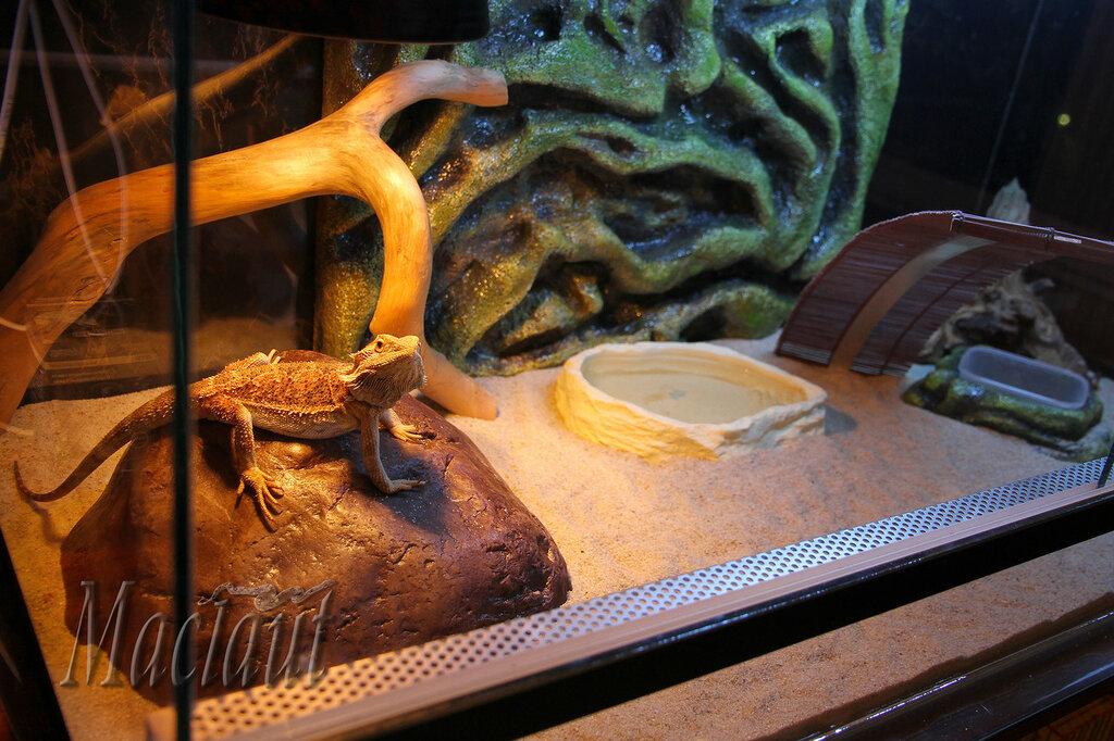 Террариум своими руками для змей
