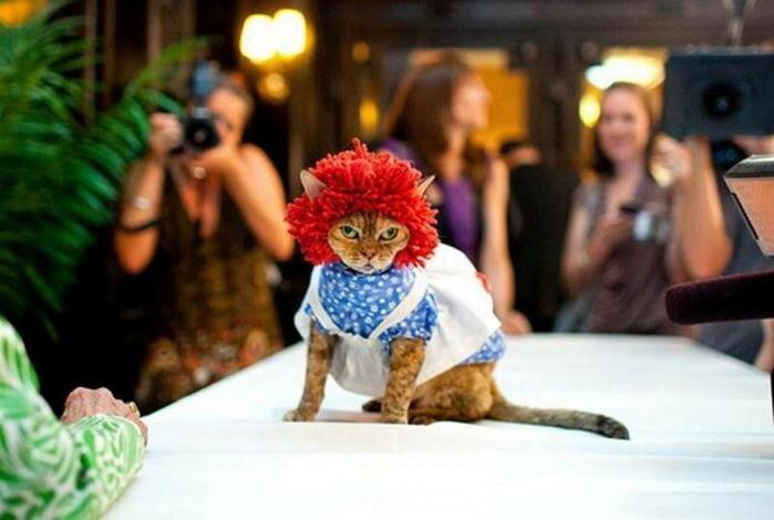 Кошачий показ мод на Манхэттене (фотографии)