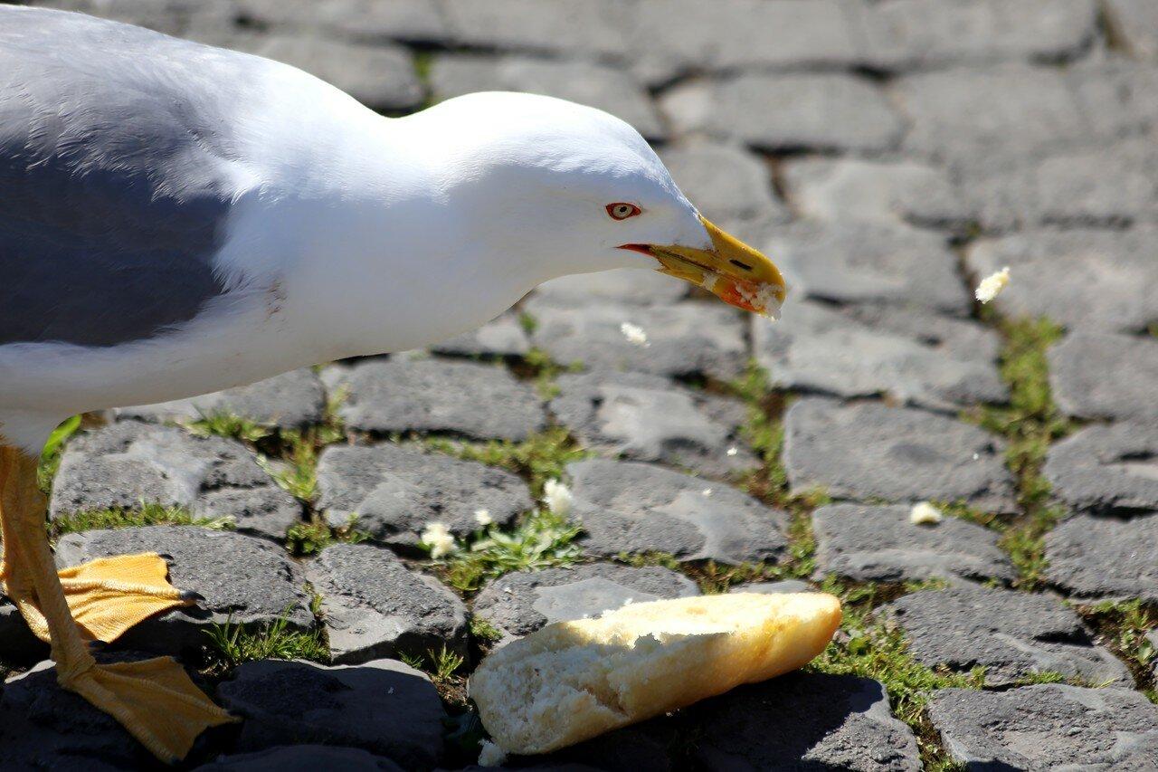 Чайка и гамбургер