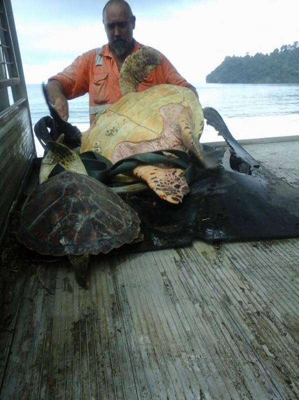 Эти мужчины покупают морских черепах, чтобы… выпустить их обратно в море