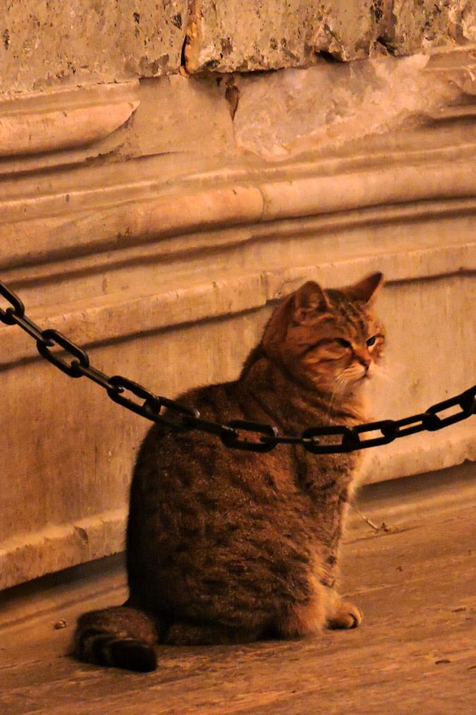 Котик (23).jpg
