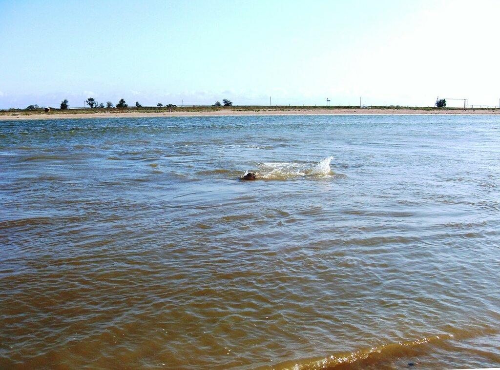 Плаванье в проливе ... SDC14806.JPG