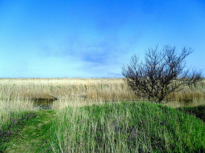 Весна, простор... и на Природе ... SAM_6238.JPG