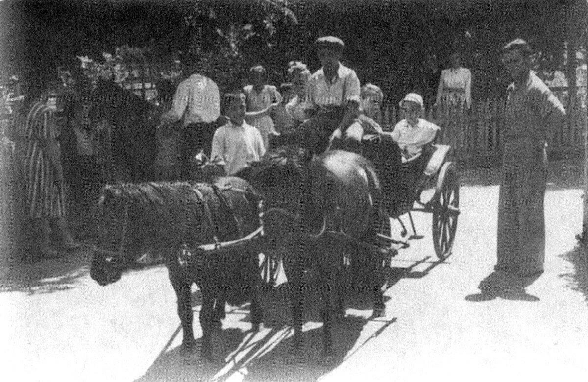 1950. Володя Высоцкий на лошади в зоопарке г.Киева. Июнь