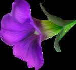 NLD Flower 6 b.png