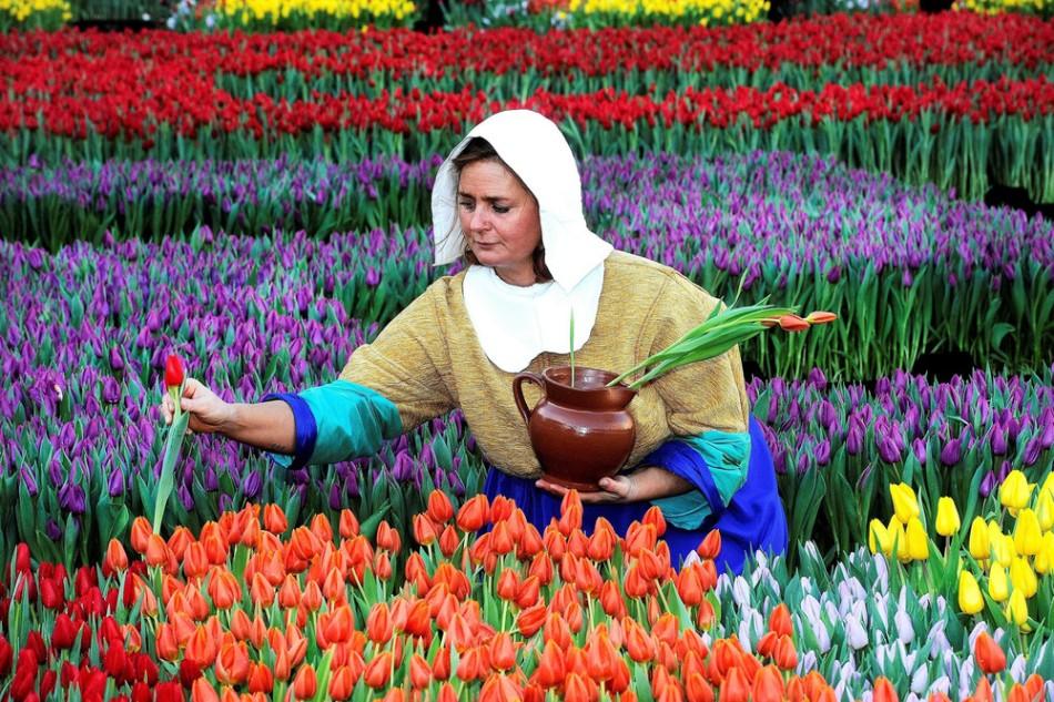 Национальный день тюльпанов в Голландии