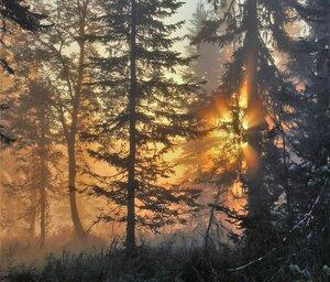 Солнце поднимается из-за леса