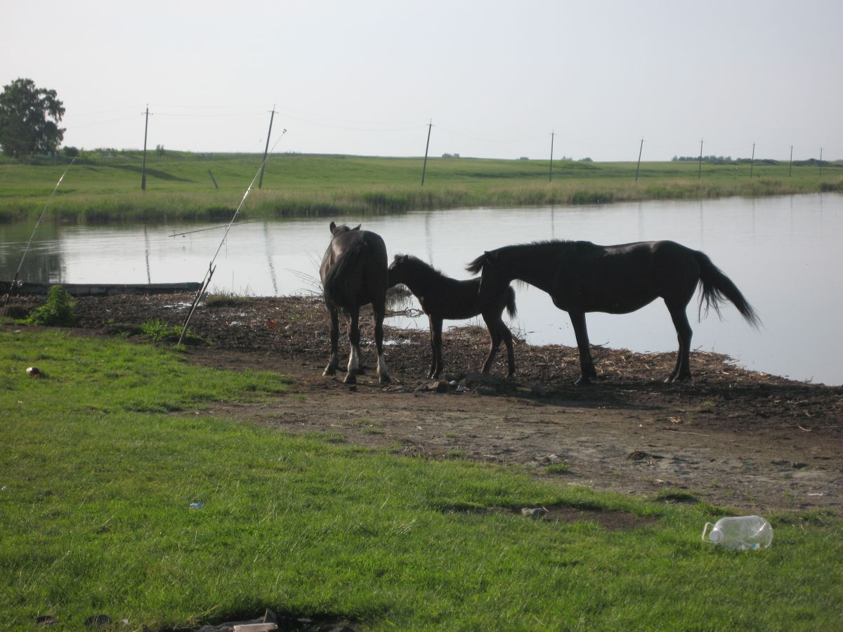Кони вороные… Или лошади ;) (30.08.2015)