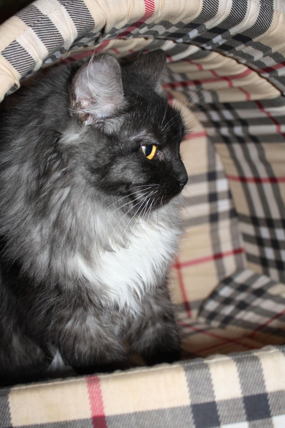 Котенок Гав из приюта догпорт