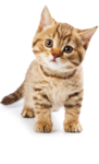 Мурлыка — всё о жизни кошек