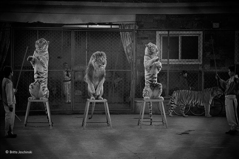 10. Бритта Ящински (Германия/Великобритания), «Сломленные кошки». Победитель в категории «Фотожурнал
