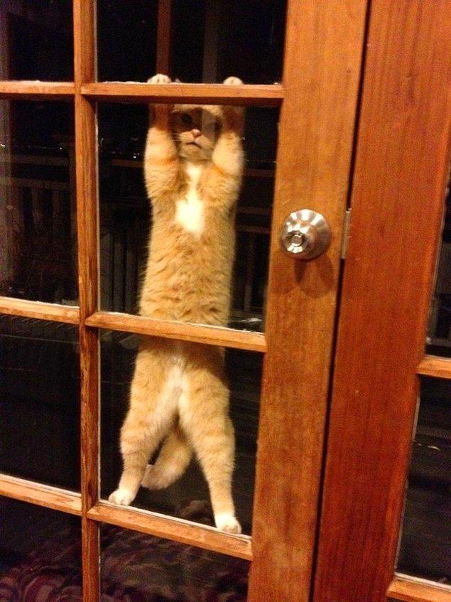 Котик пытается привлечь внимание своего человека.