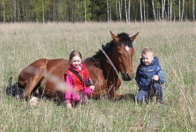 В приюте под Высоковском волонтеры спасают лошадей, собранных со всей России