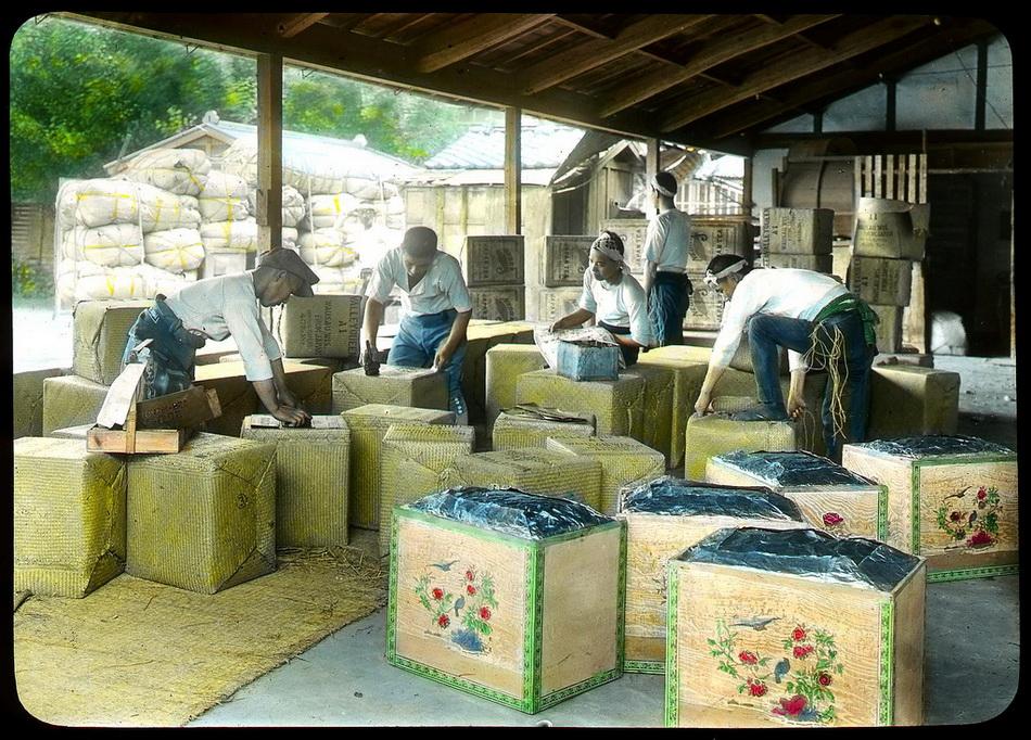 Как собирали и делали зеленый чай в Японии в начале XX века