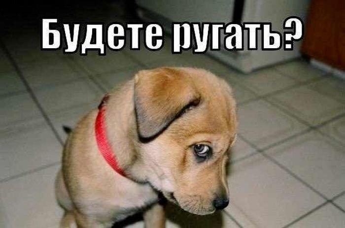 fotopodborka_vtornika_52_foto_45.jpg