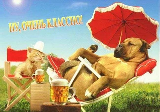 С первым днем лета! Ну, очень классно! Пес и кот на отдыхе открытки фото рисунки картинки поздравления