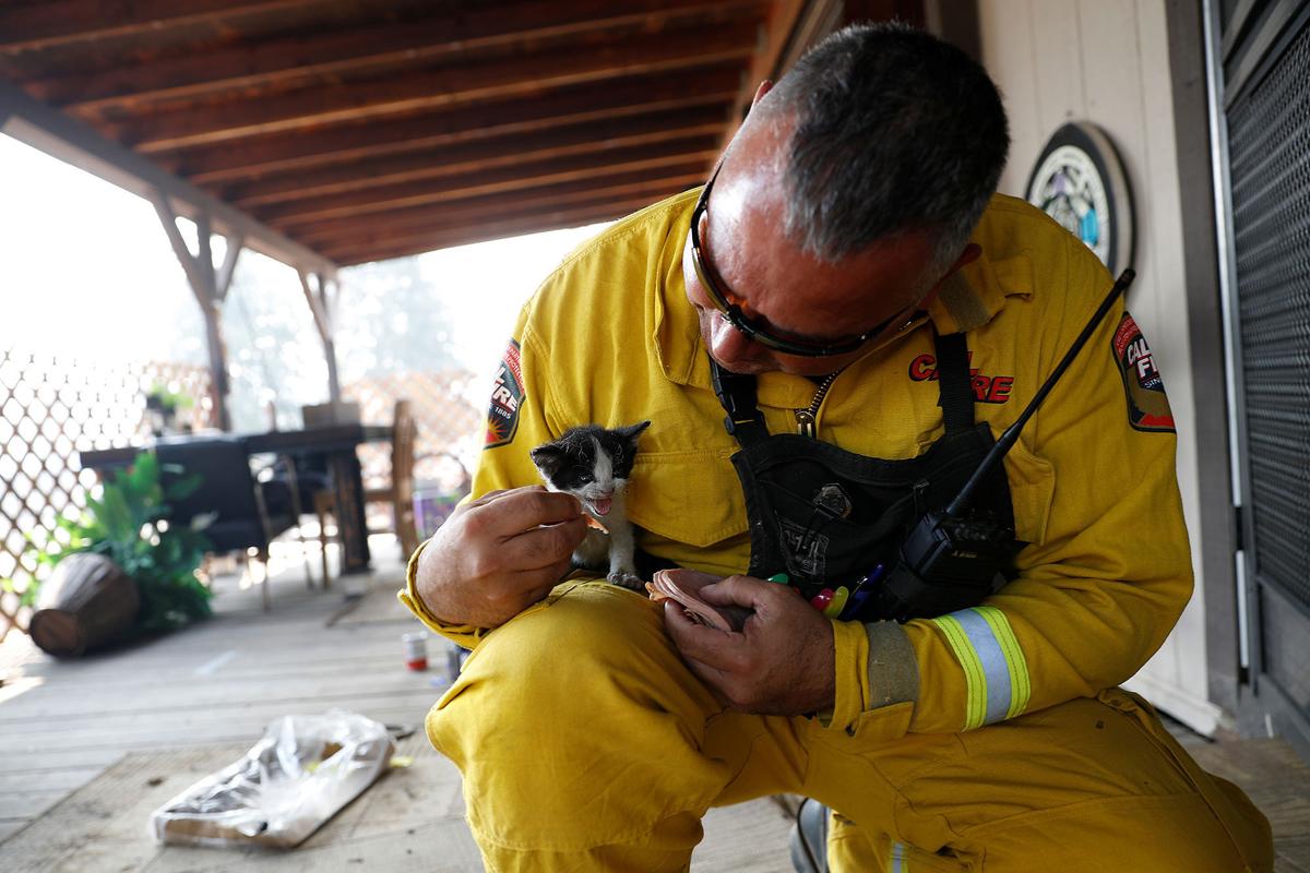 2. Командир батальона пожарной станции Альдо Гонсалес кормит пострадавшего котенка во время борьбы с