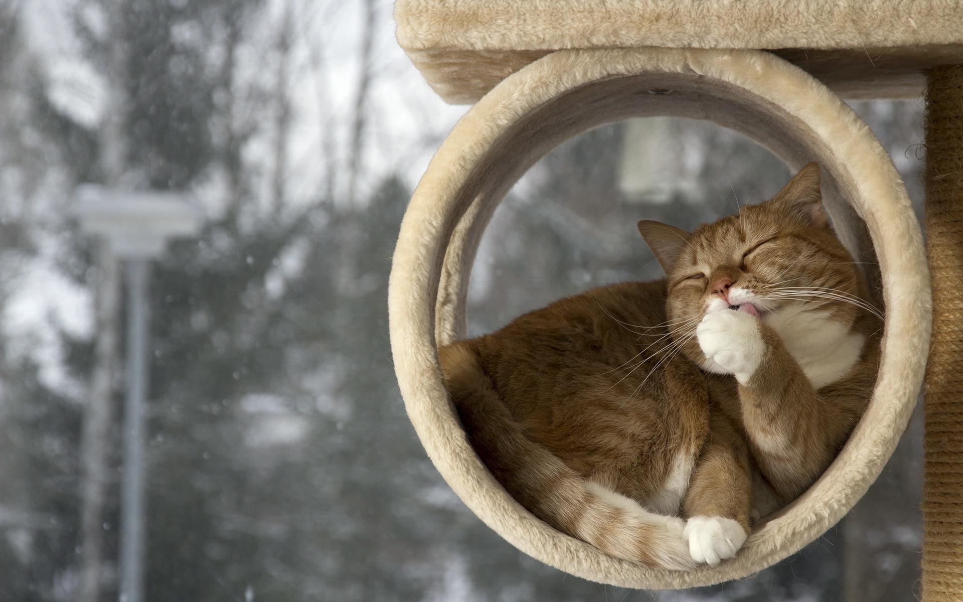 15. Кошка всегда чистая и приятно пахнет.
