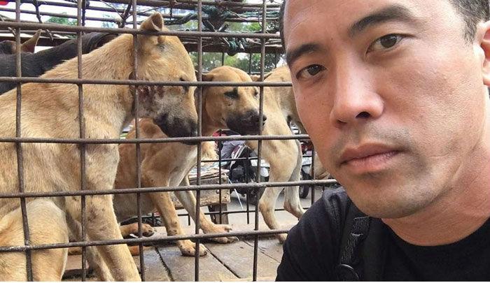 Американский бизнесмен и активист Марк Чинг спас в общей сложности тысячу собак с шести скотобоен. С