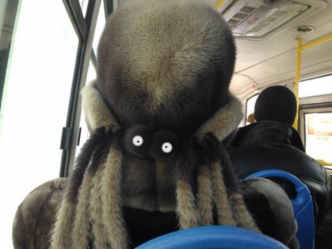 «Уснул в автобусе, проснулся — а тут такое. Чуть Кондратий не хватил».